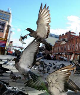 banner-repepeller-birds